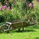 Semina ciò che ami: l'orto come scatola del tempo